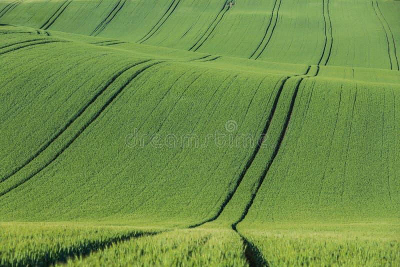 Κυματιστός γεωργικός τομέας στοκ εικόνα
