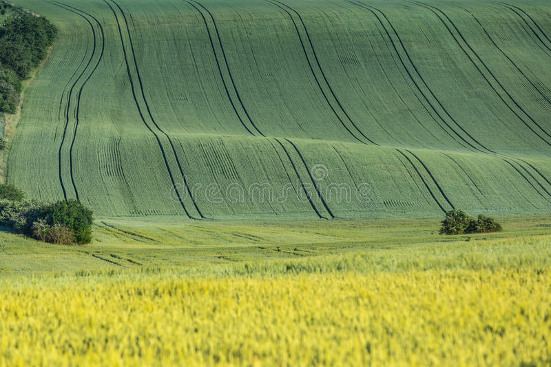 Κυματιστός γεωργικός τομέας στοκ εικόνες με δικαίωμα ελεύθερης χρήσης