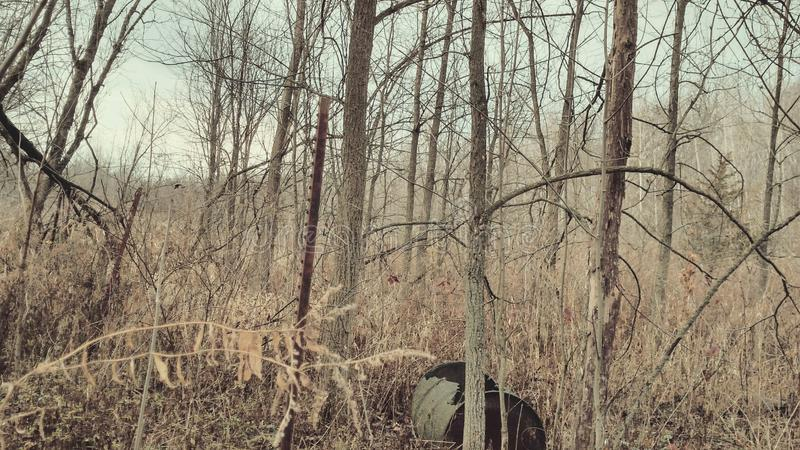 Κυνήγι δέντρων βαρελιών ξύλων του Μίτσιγκαν στοκ εικόνα