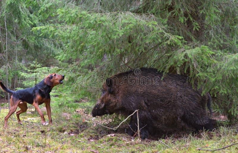 Κυνήγι με το σκυλί στοκ φωτογραφίες με δικαίωμα ελεύθερης χρήσης