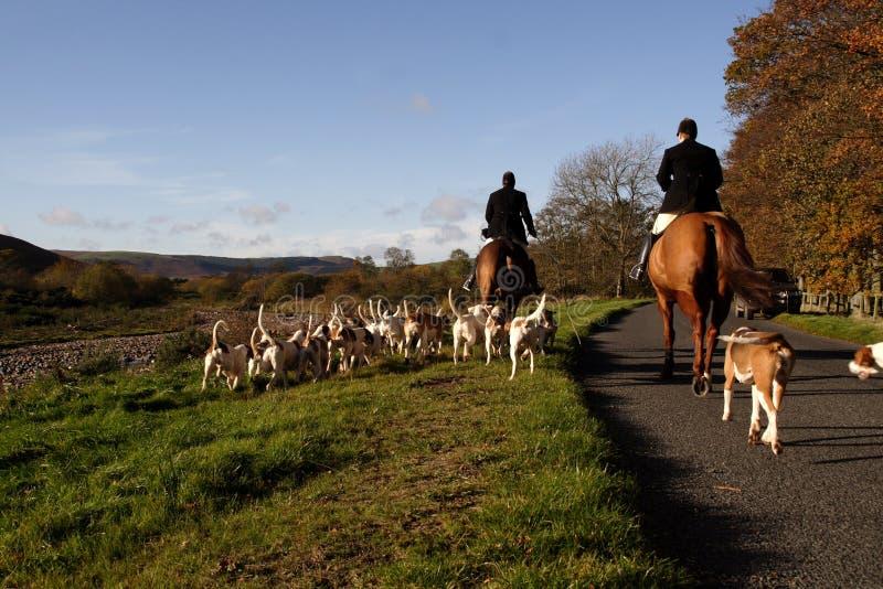 κυνήγι σκυλιών στοκ εικόνα