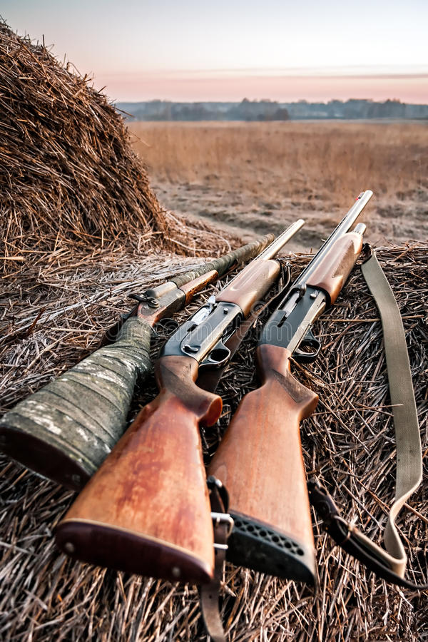 Κυνηγετικά όπλα κυνηγιού στη θυμωνιά χόρτου ενώ στάση στοκ εικόνες