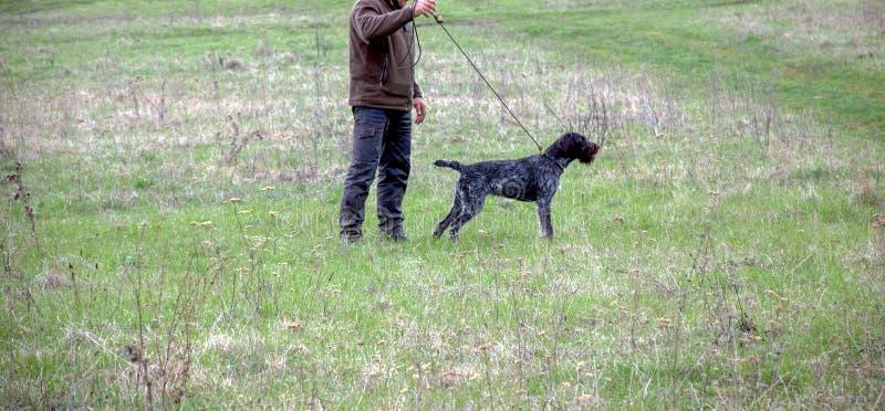 Κυνηγός με ένα γερμανικό wire-haired σκυλί στον τομέα στοκ εικόνα