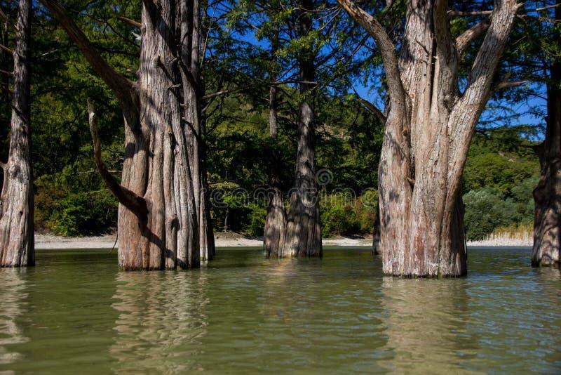 Κυπαρίσσια έλους στη λίμνη στοκ εικόνες με δικαίωμα ελεύθερης χρήσης