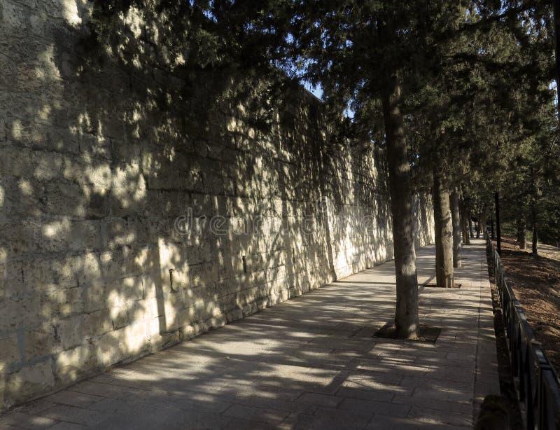 Κυπαρίσσια και σκιές στον τοίχο στοκ φωτογραφία