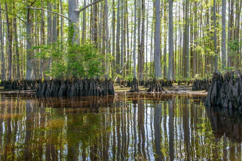 Κυπαρίσσι ποταμών στοκ εικόνες
