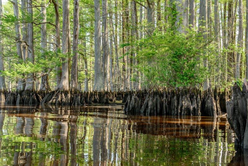 Κυπαρίσσι ποταμών στοκ φωτογραφία