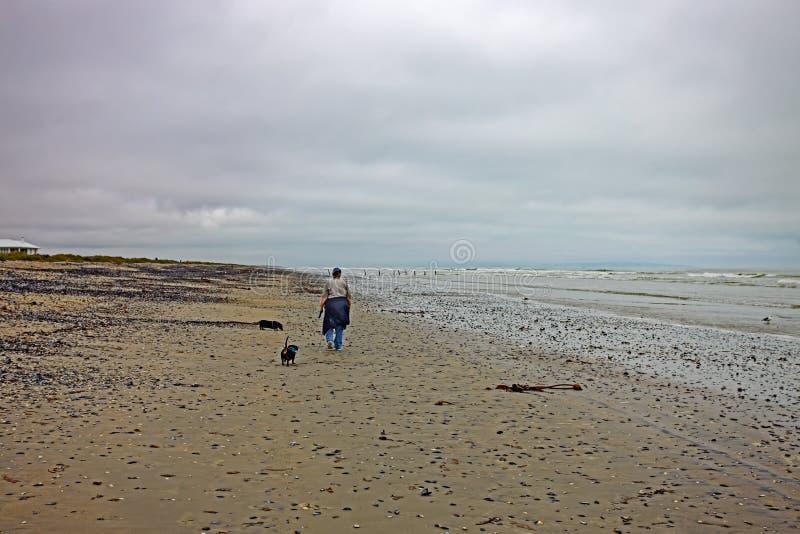 Κυρία με δύο σκυλιά που περπατά στην παραλία στοκ εικόνα με δικαίωμα ελεύθερης χρήσης