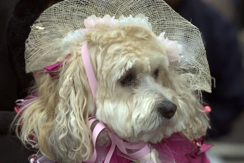 Download κυρία σκυλιών στοκ εικόνα. εικόνα από πρόσωπο, σκυλί, pets - 91273