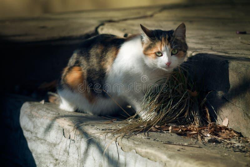 Κυρία στα σημεία, γάτα στοκ φωτογραφία με δικαίωμα ελεύθερης χρήσης