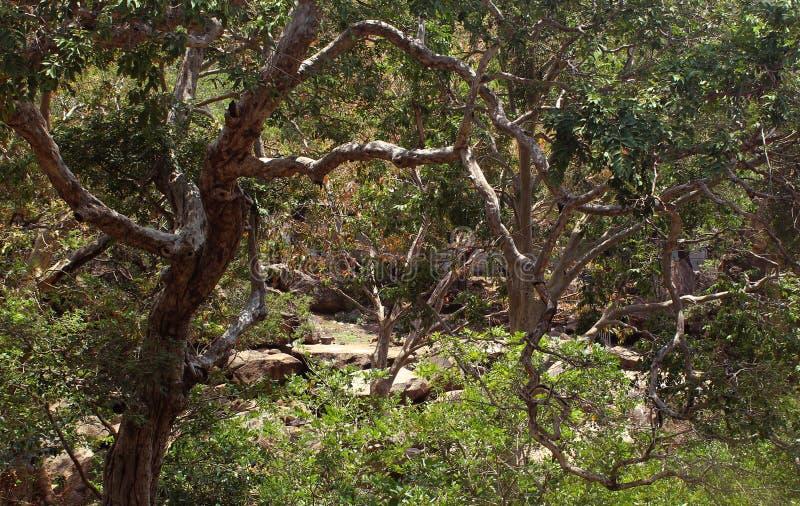 Κυρτοί κλάδοι δέντρων στοκ φωτογραφίες με δικαίωμα ελεύθερης χρήσης