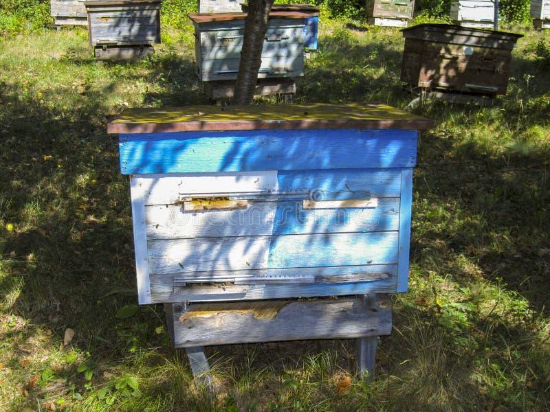 Κυψέλη με τις μέλισσες σε ένα μελισσουργείο στοκ φωτογραφία