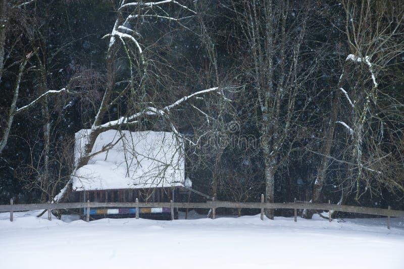 Κυψέλη στο χειμερινό τοπίο με τα γυμνά δέντρα στο υπόβαθρο στοκ εικόνες