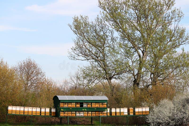 Κυψέλες μελισσών στο λιβάδι στοκ φωτογραφία με δικαίωμα ελεύθερης χρήσης