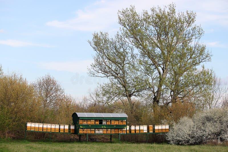 Κυψέλες μελισσών στο πράσινο τοπίο τομέων στοκ φωτογραφία