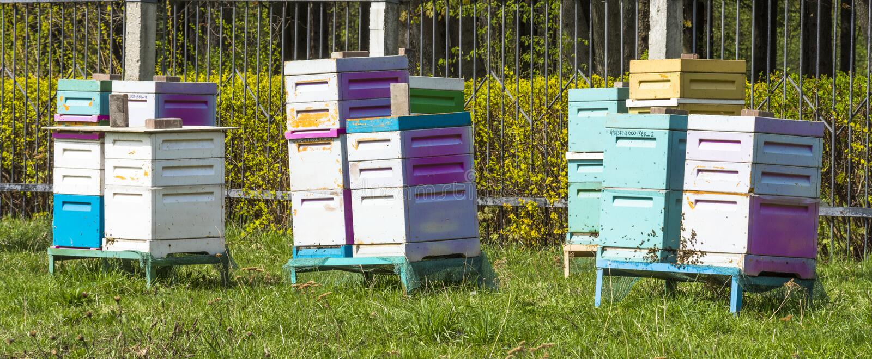 Κυψέλες μελισσών στοκ φωτογραφία με δικαίωμα ελεύθερης χρήσης