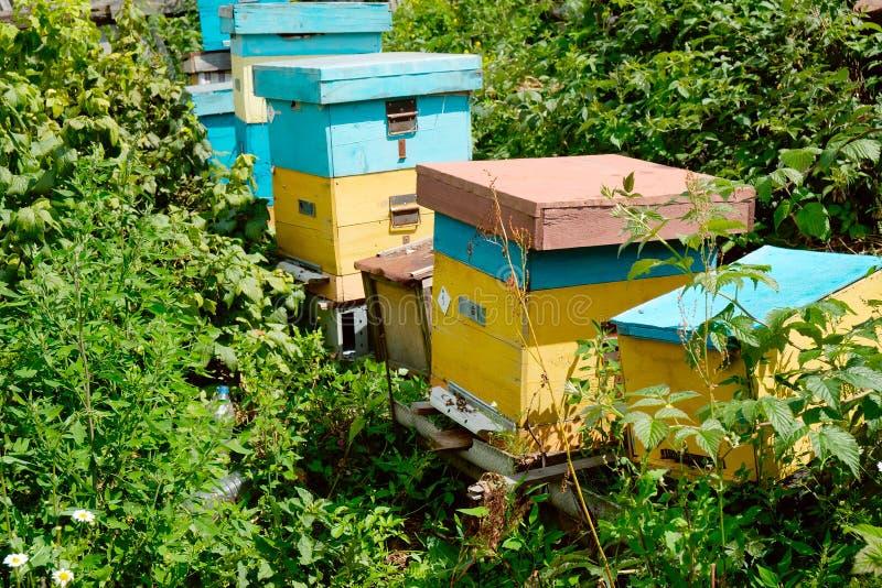 Κυψέλες σε έναν μικρό κήπο μελισσουργείων στοκ εικόνες με δικαίωμα ελεύθερης χρήσης