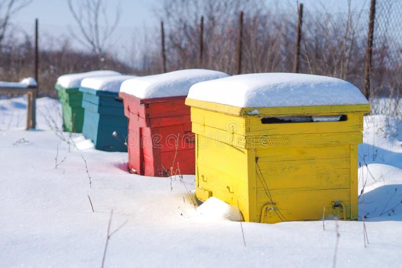 Κυψέλες χειμερινών μελισσών στοκ εικόνες