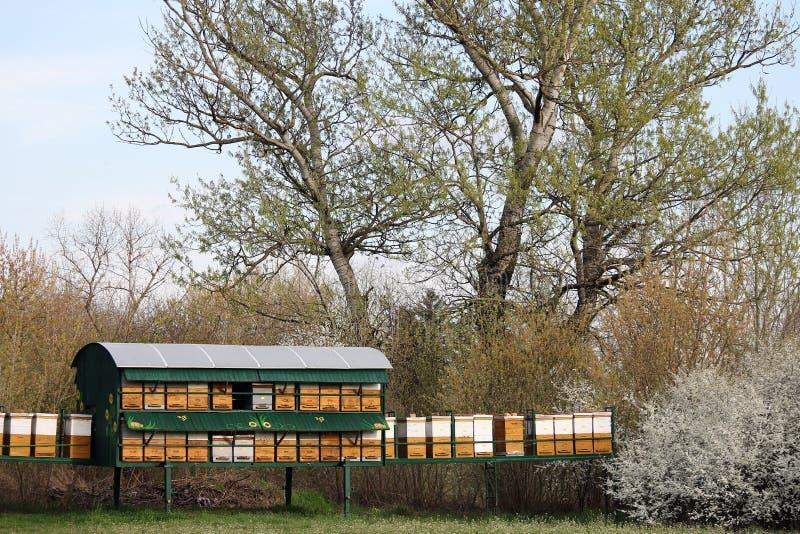 Κυψέλη μελισσών στον τομέα στοκ εικόνες με δικαίωμα ελεύθερης χρήσης