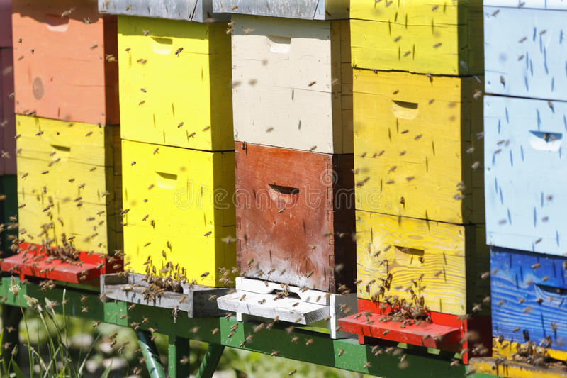 Κυψέλη boxses στοκ φωτογραφία με δικαίωμα ελεύθερης χρήσης