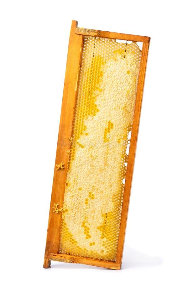 Κυψελωτό πλαίσιο με το φρέσκο μέλι που απομονώνεται σε ένα άσπρο υπόβαθρο στοκ εικόνες