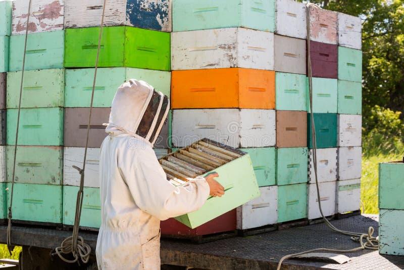 Κυψελωτό κλουβί εκφόρτωσης μελισσοκόμων από το φορτηγό στοκ εικόνα με δικαίωμα ελεύθερης χρήσης
