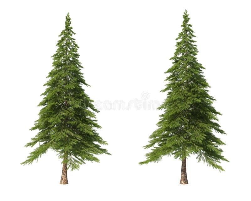 Κωνοφόρα δέντρα σε ένα απομονωμένο υπόβαθρο Ερυθρελάτες ελεύθερη απεικόνιση δικαιώματος