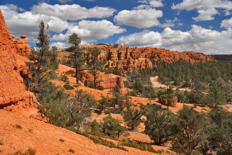 κωνοφόρα κόκκινα δάση αργί&l στοκ εικόνα με δικαίωμα ελεύθερης χρήσης