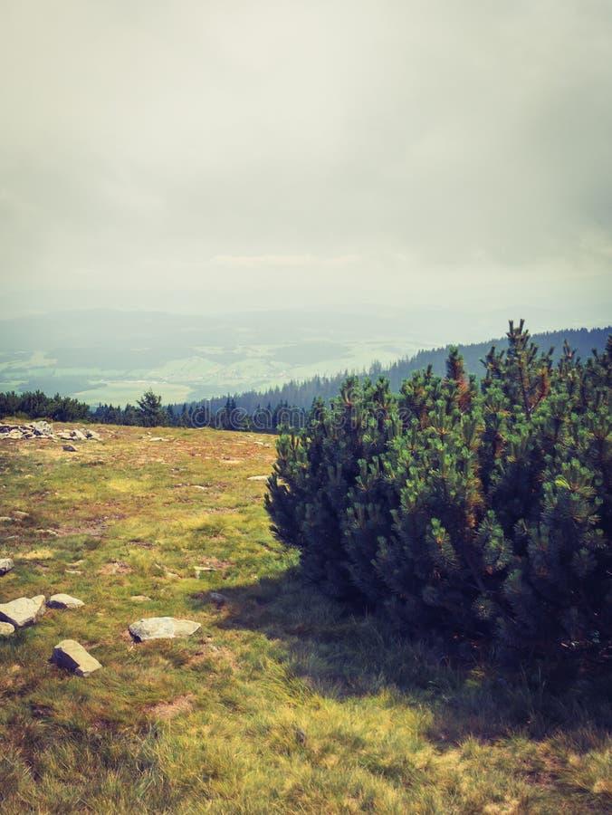 Κωνοφόροι θάμνοι στην κορυφή του βουνού στοκ εικόνες με δικαίωμα ελεύθερης χρήσης