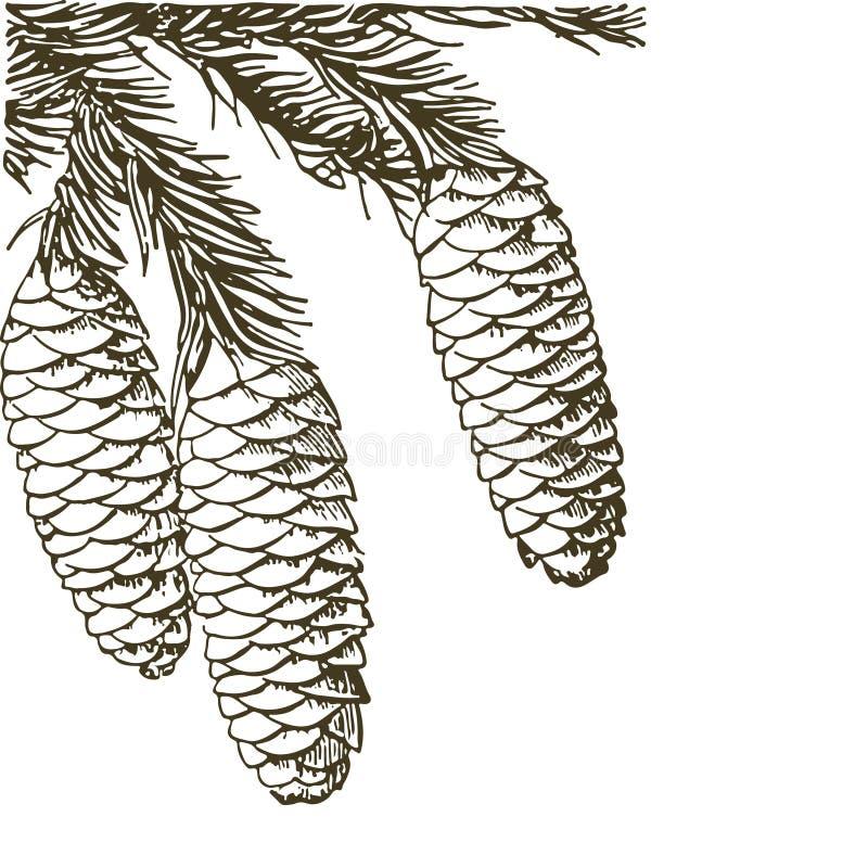 Κωνοφόροι κλάδοι των δέντρων με τους κώνους: πεύκο, ερυθρελάτες, έλατο, cypr διανυσματική απεικόνιση