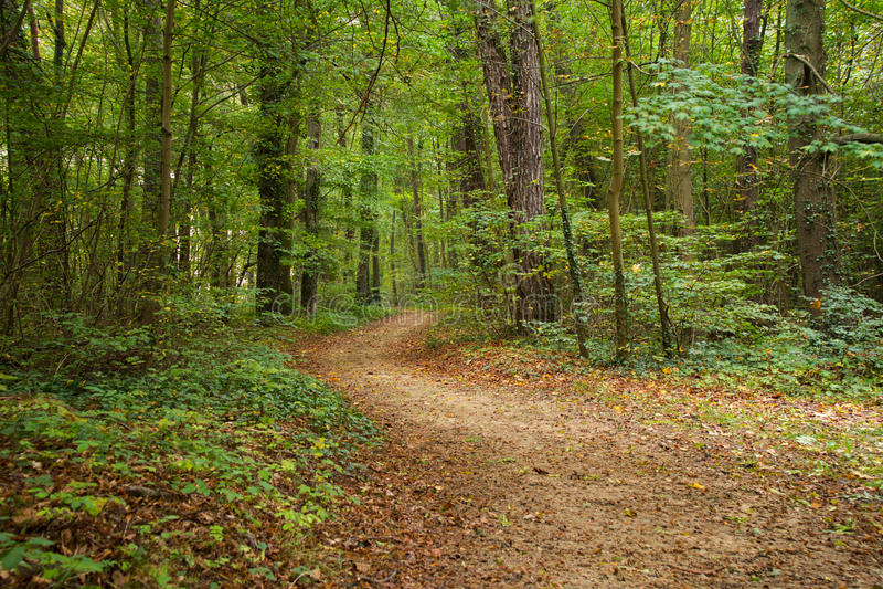 κωνοφόρο δάσος της Ουκρανίας μονοπατιών της ανατολικής Ευρώπης δασικό