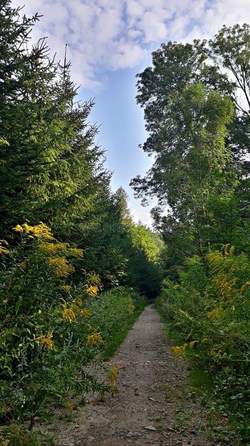 κωνοφόρο δάσος της Ουκρανίας μονοπατιών της ανατολικής Ευρώπης δασικό στοκ εικόνες