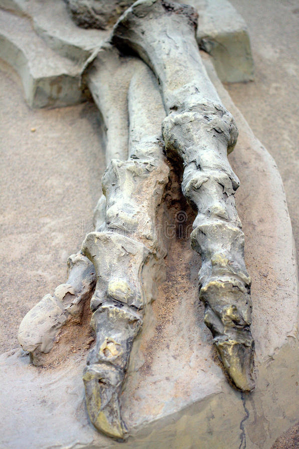 Κόκκαλα δεινοσαύρων στοκ εικόνες με δικαίωμα ελεύθερης χρήσης