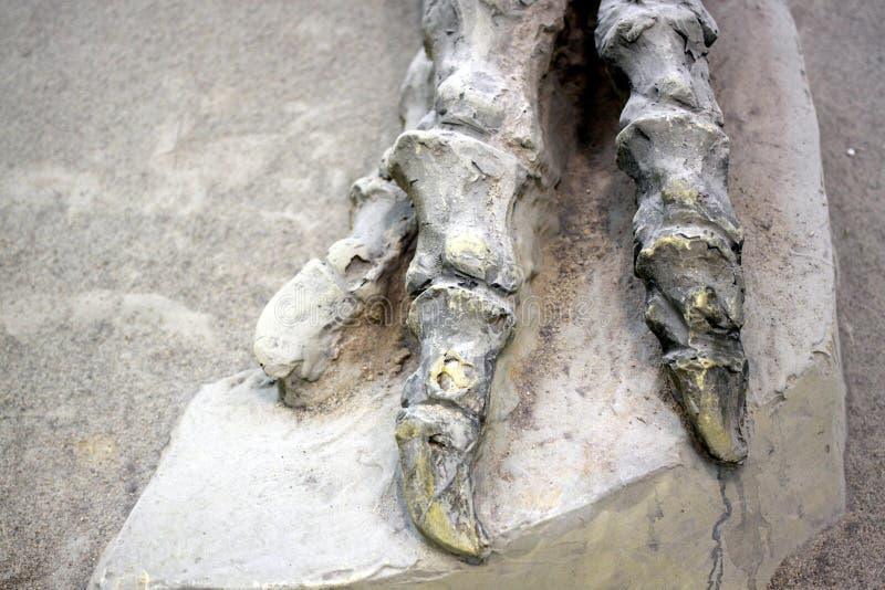 Κόκκαλα δεινοσαύρων στοκ φωτογραφίες με δικαίωμα ελεύθερης χρήσης