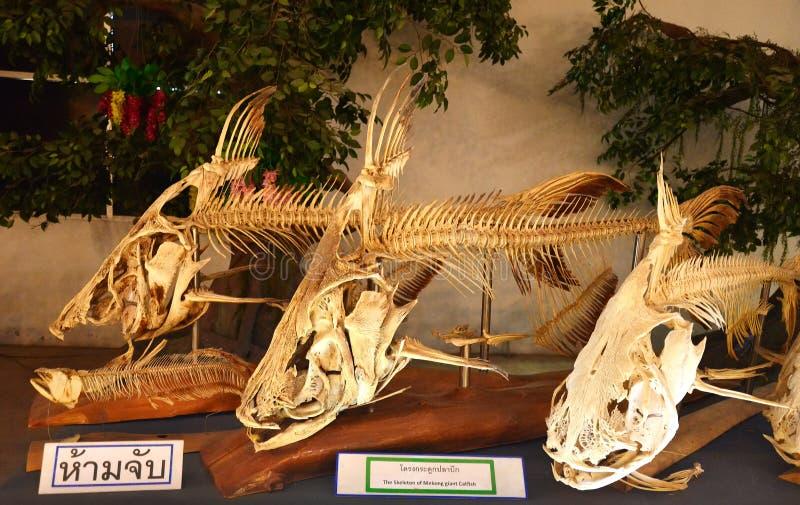 Κόκκαλα ψαριών στοκ φωτογραφία με δικαίωμα ελεύθερης χρήσης