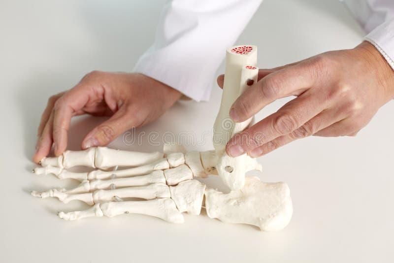 Κόκκαλο ποδιών στοκ εικόνα με δικαίωμα ελεύθερης χρήσης