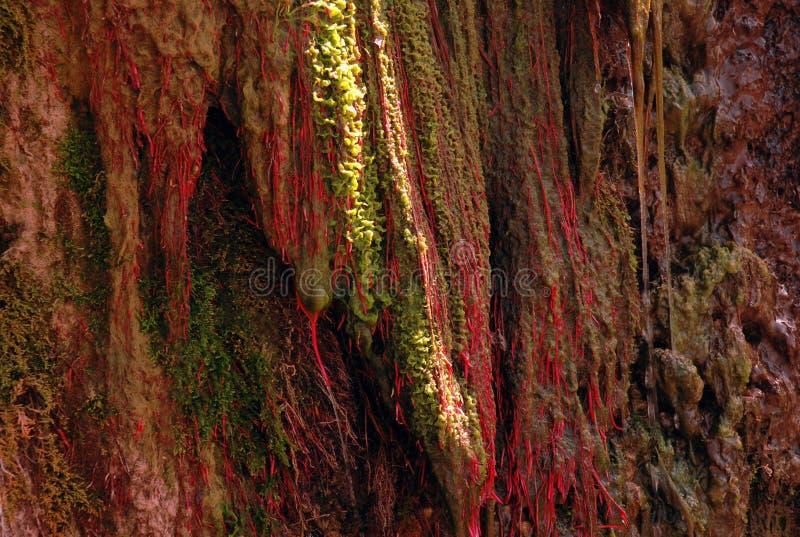 Κόκκινα άλγη στην Τιέν Σαν στοκ εικόνες