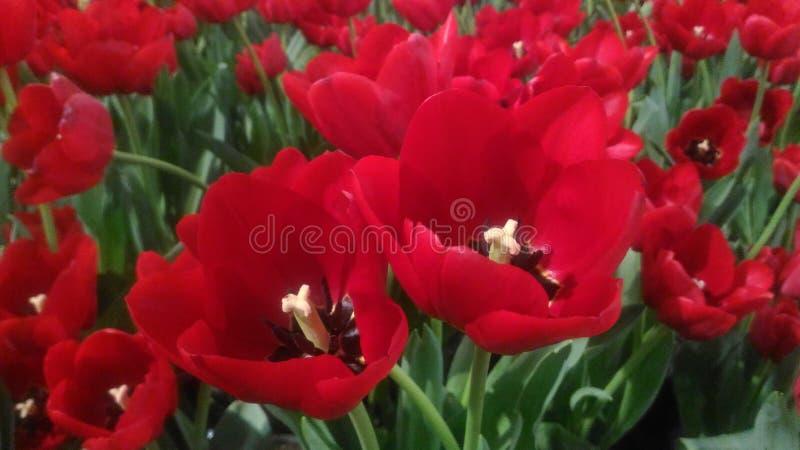 Κόκκινα ανθίζοντας λουλούδια στοκ φωτογραφία