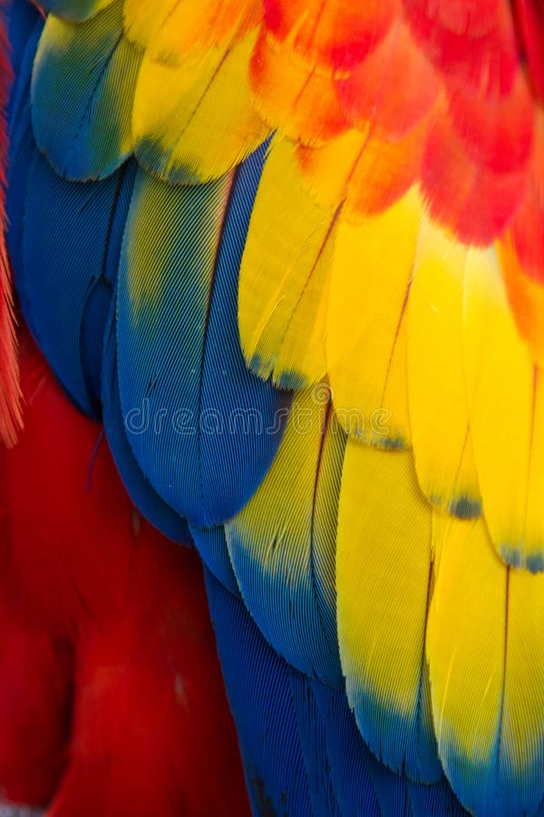 Κόκκινα, κίτρινα, μπλε και πράσινα φτερά ενός παπαγάλου Macaw στοκ φωτογραφία
