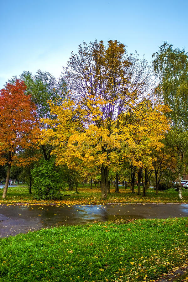 Κόκκινα και κίτρινα δέντρα στο πάρκο φθινοπώρου στοκ εικόνα με δικαίωμα ελεύθερης χρήσης