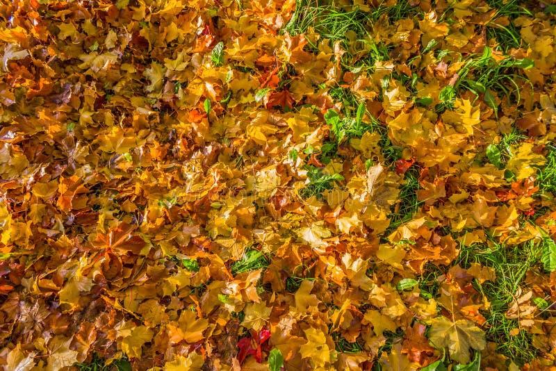 Κόκκινα και κίτρινα πεσμένα φύλλα φθινοπώρου στοκ φωτογραφία με δικαίωμα ελεύθερης χρήσης