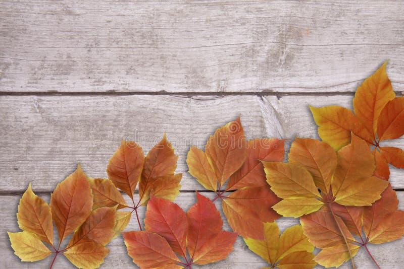 Κόκκινα και κίτρινα φύλλα φθινοπώρου με το ragged ξύλινο διάστημα υποβάθρου και αντιγράφων - απόθεμα στοκ φωτογραφίες με δικαίωμα ελεύθερης χρήσης