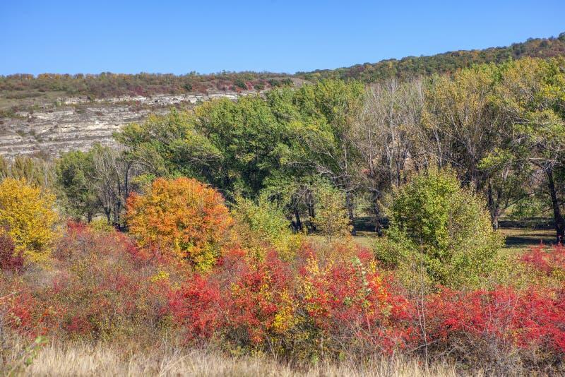 Κόκκινα και πράσινα δέντρα στοκ εικόνα με δικαίωμα ελεύθερης χρήσης