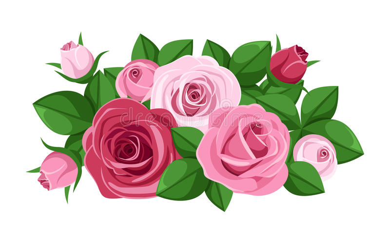 Κόκκινα και ρόδινα τριαντάφυλλα, μπουμπούκια τριαντάφυλλου και φύλλα. διανυσματική απεικόνιση