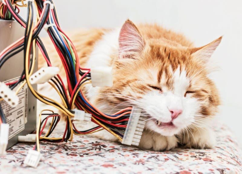 Κόκκινα καλώδια γατών και υπολογιστών στοκ εικόνες