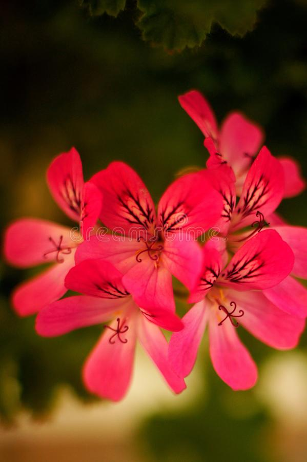 Κόκκινα λουλούδια με τα μικροσκοπικά κομμάτια στοκ εικόνα