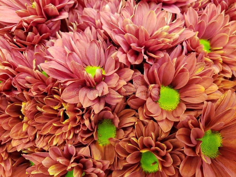 κόκκινα λουλούδια νταλιών σε μια floral ανθοδέσμη, ένα υπόβαθρο και μια σύσταση στοκ φωτογραφία