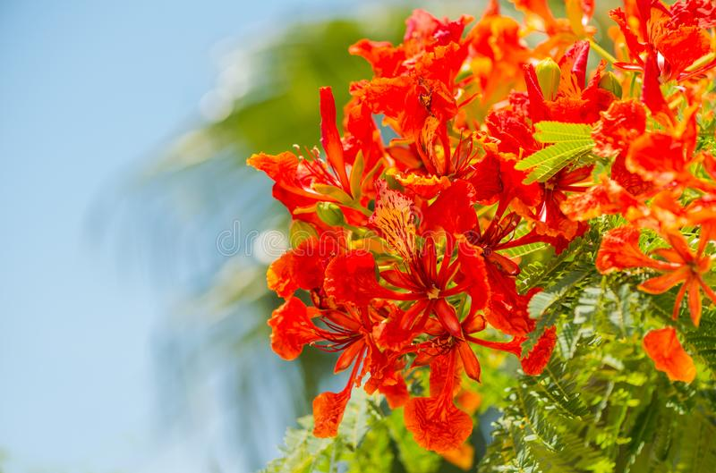 Κόκκινα λουλούδια στον εξωτικό θάμνο στοκ φωτογραφία με δικαίωμα ελεύθερης χρήσης