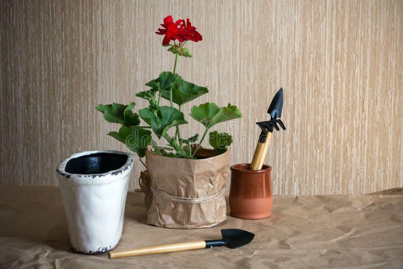 Κόκκινα λουλούδι και εργαλεία γερανιών για τα λουλούδια σε χαρτί τεχνών Προετοιμασία για τη μεταμόσχευση των εσωτερικών εγκαταστά στοκ φωτογραφίες με δικαίωμα ελεύθερης χρήσης