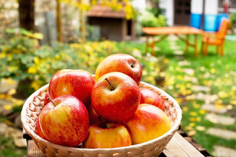 Κόκκινα μήλα στο κύπελλο στοκ φωτογραφία